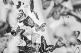 Butterflies Memory Loss Support Charity Evening